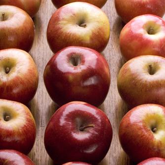 Foods High In Ursolic Acid