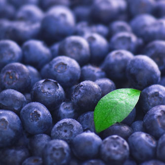 Blueberries Confer Immune & Cardiovascular Benefits