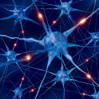Nerve Cells Regrown Worldhealth Net Anti Aging News