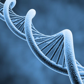 Common Gene Between Aging & Cancer Identified