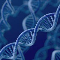 Novel Mechanism of Aging Revealed