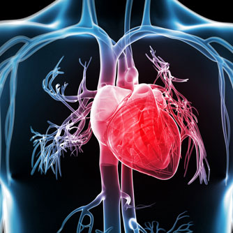 Low Testosterone Increases Heart Disease Risk