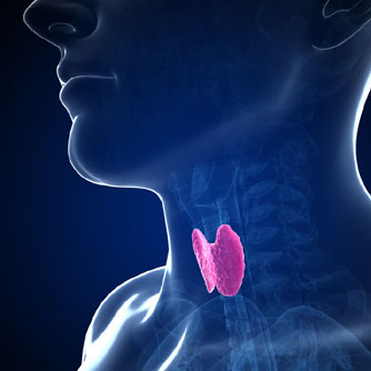 Stem Cells Provide New Thyroid Therapies