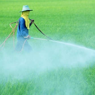 Past Generation Exposures to Pesticide May Precipitate Disease
