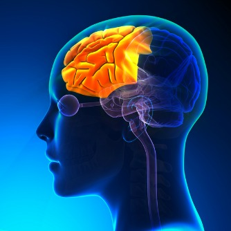 Regular Exercise Revs Up Brain Health