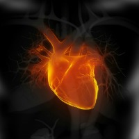 Fine and Ultrafine Particles Impair Heart Function