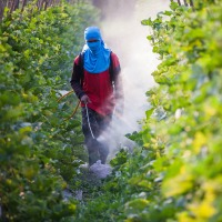 Pesticide Exposure Linked to Heart Disease