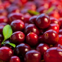 Cranberries Confer Infection Protection