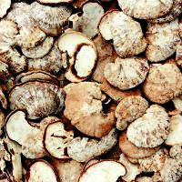 Asian Mushroom May Combat Obesity