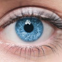 Revolutionary Eye Drops to Treat Macular Degeneration