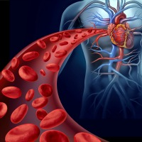 Testosterone & Cardiovascular Safety