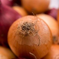 Onion Skin Extract Lowers Blood Pressure