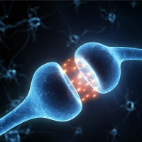 Earlier Alzheimer's Diagnosis Possible with Synapse Discovery