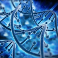Longer Life Span with Genetic Mutation