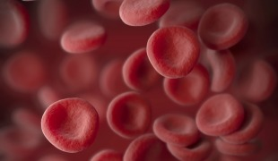 New Types of Blood Cells Revealed