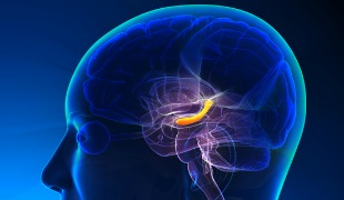 Head Injuries Increase Risk of Brain Diseases