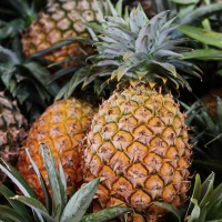 Pineapples Halt Harmful Gut Bacteria