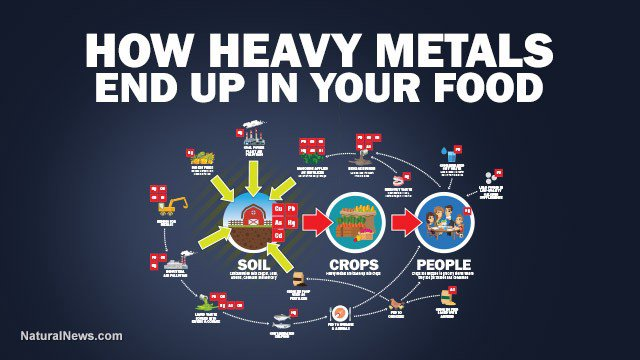 heavymetals Credit:NaturalNews