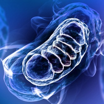 Role of Mitochondria in Neurodegenerative Diseases